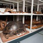 Certains spécimens datent de plus d'un siècle. ©KevinFiguier/JT