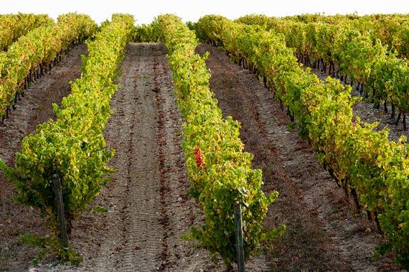 vignerons