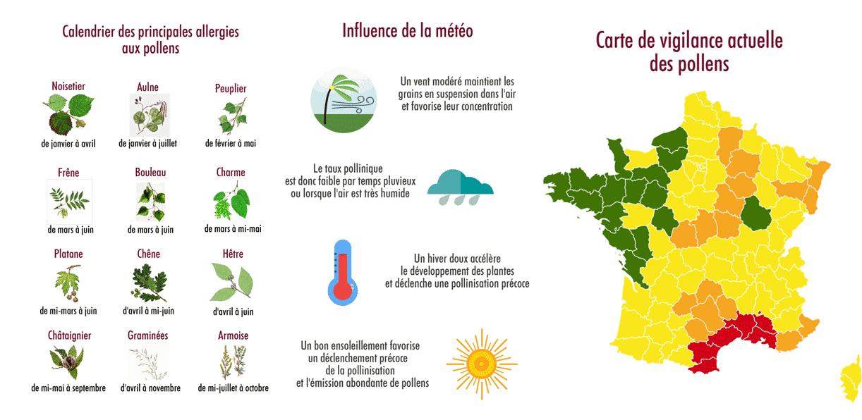 infographie ©jt allergies