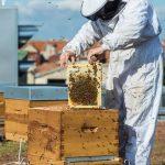 [En immersion] Avec un apiculteur des villes