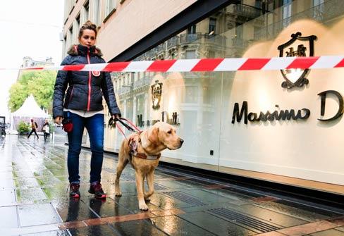 [En Immersion] Avec les chiens guides d'aveugles de Toulouse