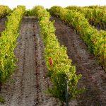 [Et Maintenant ?] Après le gel, les vignerons s'organisent
