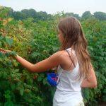 [Dossier] Des adresses pour dénicher des produits locaux à Toulouse