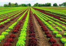 aider les agriculteurs