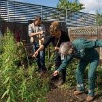 3 solutions pour se mettre au jardinage
