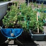 [Dossier] Des ateliers pour jardiner sur les toits