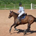 [DOSSIER] Apac, l'équitation sans condition
