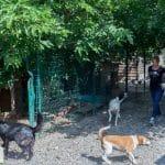 [DOSSIER] L'arche de Betty, à Castelginest, recueille les animaux abandonnés