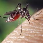 Moustique tigre : les bons gestes pour un été sans tracas