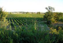 Le domaine de Candie près de Toulouse