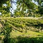 [DOSSIER] Au domaine de la Ramaye, Michel Issaly produit des vins biodynamiques