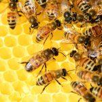Biomimétisme et économie : s'inspirer des écosystèmes