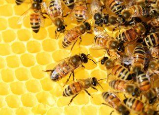 Ruche avec des abeilles