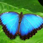 Biomimétisme : la nature pour modèle