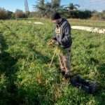 Macadem Gardens, l'exploitation qui déterre les variétés de légumes oubliés