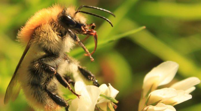 Sauver les abeilles ©Llann Wé