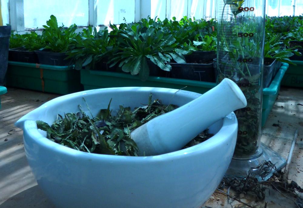 La poudre magique de ChimÉco pour dépolluer l'eau