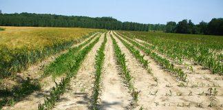 La préfecture du Gard annonce que plusieurs territoires du sud du département sont placés en niveau d'alerte sécheresse renforcée ©DR