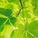Trophées des solutions 2019 : les nommés dans la catégorie environnementale