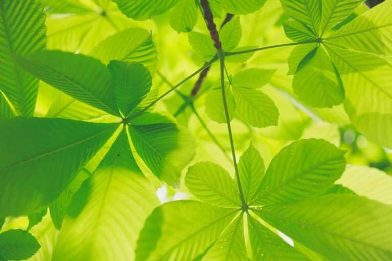 Le Conseil départemental s'engage envers des associations écologiques