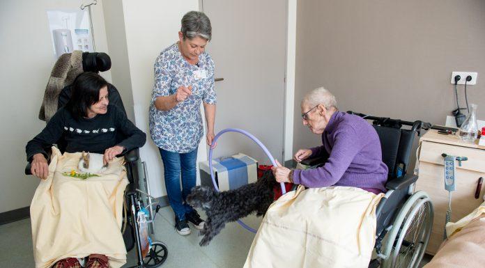 Hôpital Joseph-Ducuing: la médiation animale pour les personnes en fin de vie