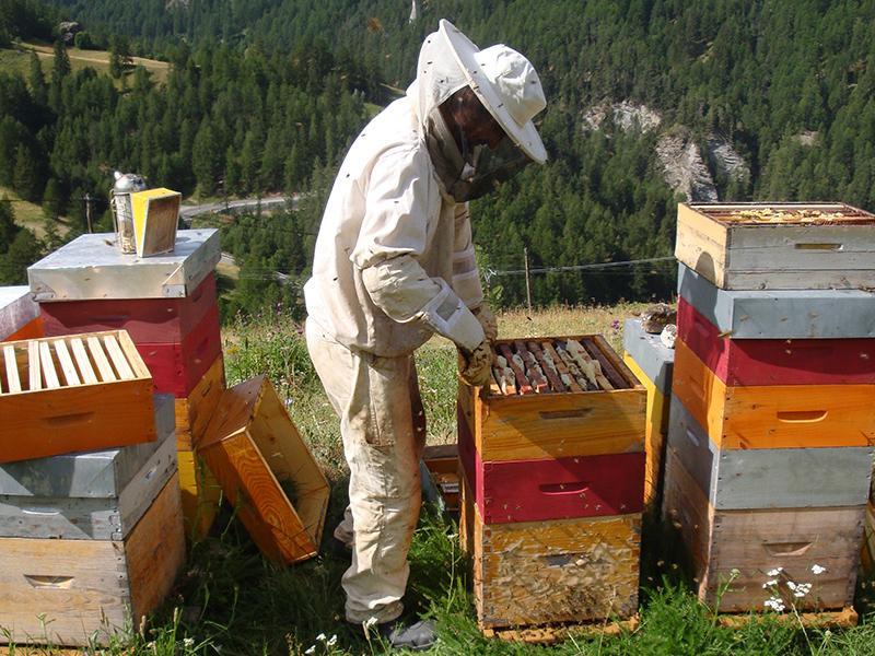 parrainer ruche