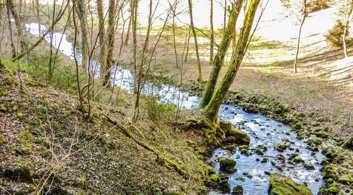 Ruisseau Restriction eau Haute-Garonne©DamienCret