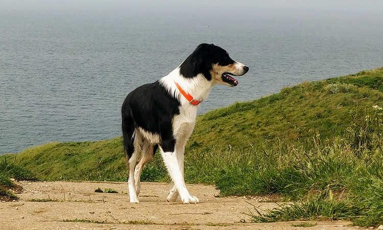 epillet-chien-balade