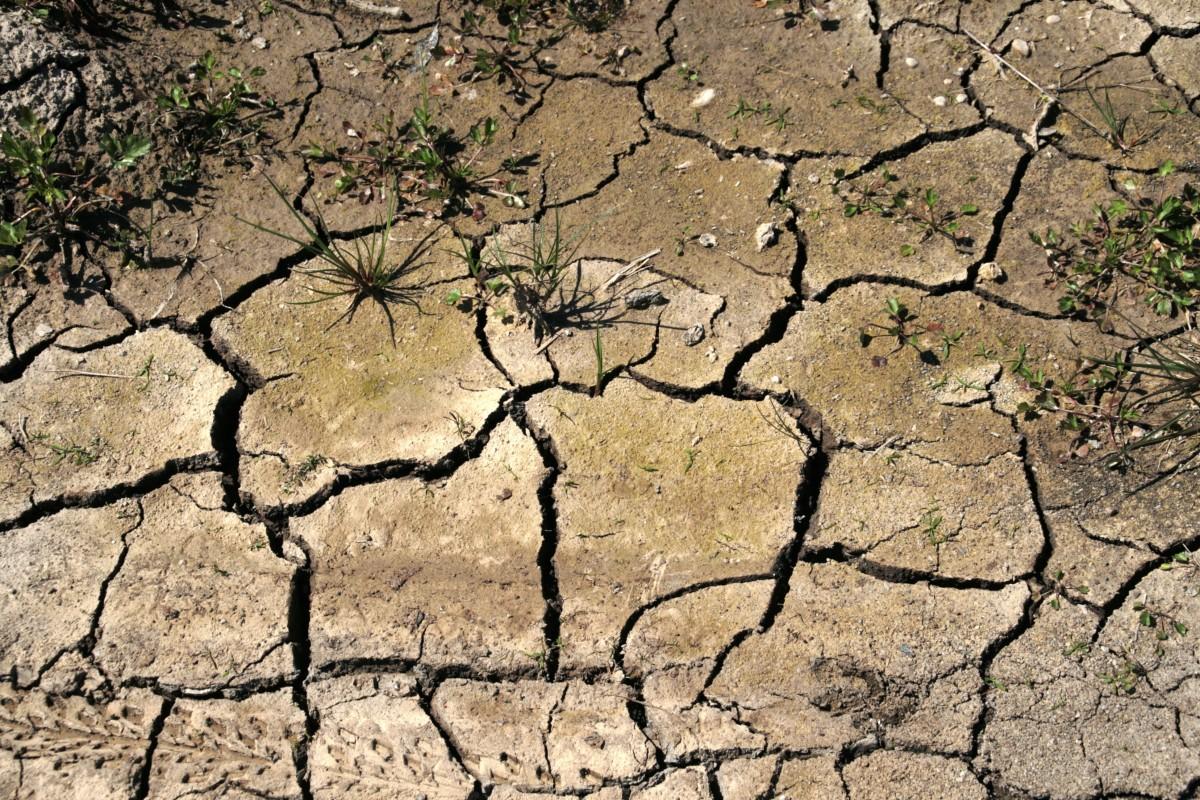 Aléas climatiques : La Région vote une aide exceptionnelle de 1 millions d'euros