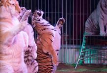 cirque animaux zoopolis © Ludovic Sueur - PAZ