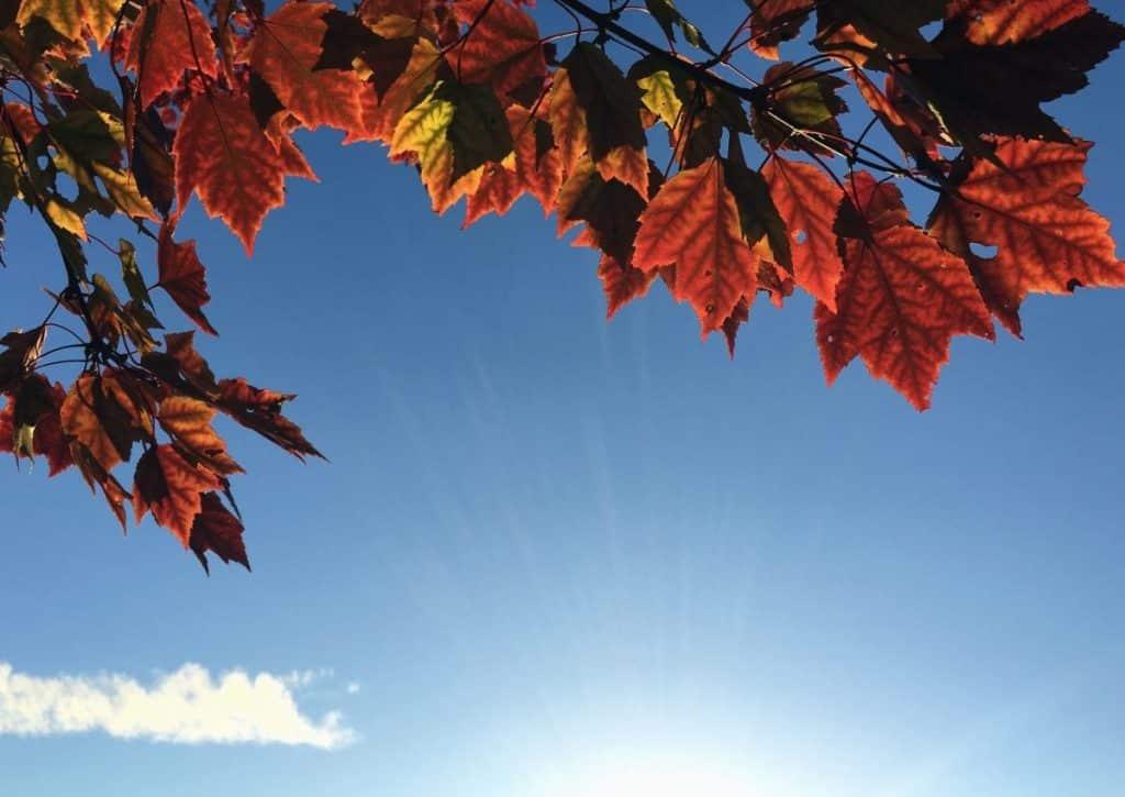 beau temps automne soleil Toulouse vendredi