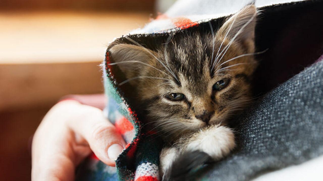 Catspad Une Gamelle Connectee Pour Nourrir Les Chats A Distance