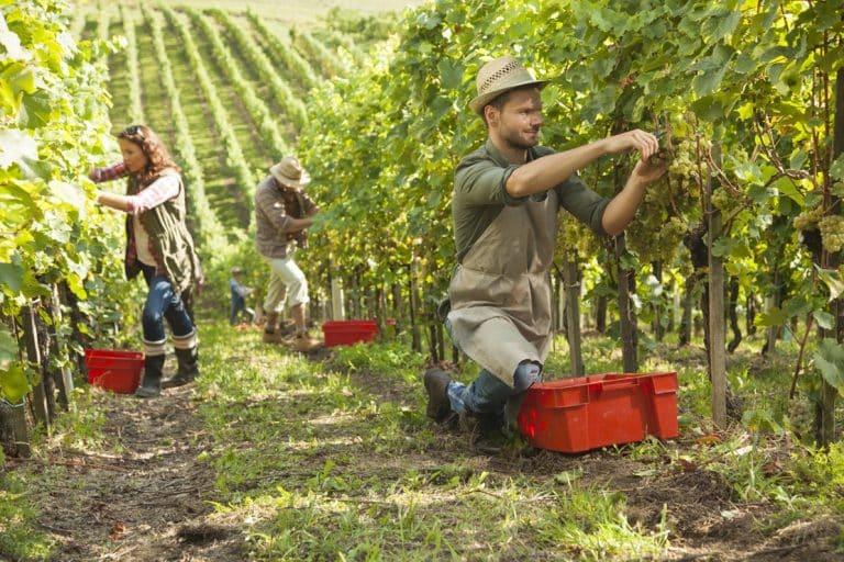 Des solutions de logement originales pour les travailleurs saisonniers d'Occitanie
