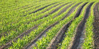 conversioLa Chambre d'agriculture d'Occitanie dénonce les conclusions d'une étude d'Atmo Occitanie sur la présence de produits phytosanitaires dans l'air ©GoranHn du secteur agricole