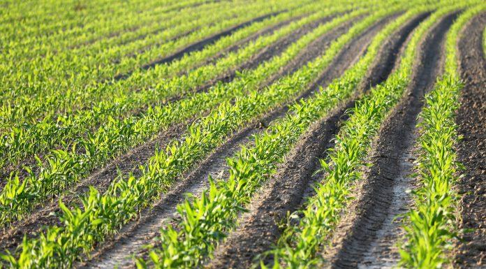 conversion du secteur agricole