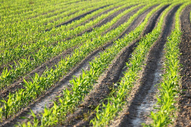 Le coup de gueule de la Chambre d'agriculture d'Occitanie contre la dernière étude d'Atmo