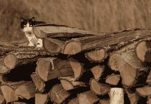 chat caché dans un tas de bûches