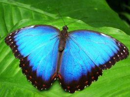 Papillon biomimétisme