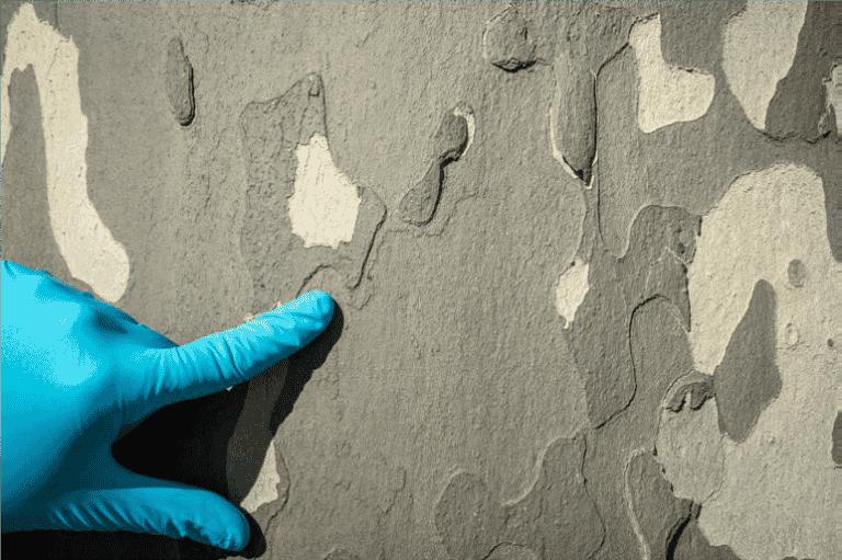 Quand l'écorce des platanes révèle la pollution aux nanoparticules des voitures