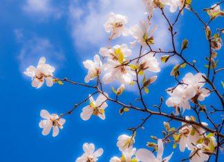 printemps ciel bleu météo