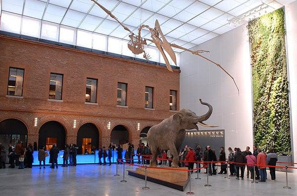 Femmes, sorcellerie et écoféminisme au Muséum de Toulouse