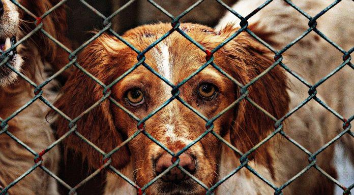 abandons animaux