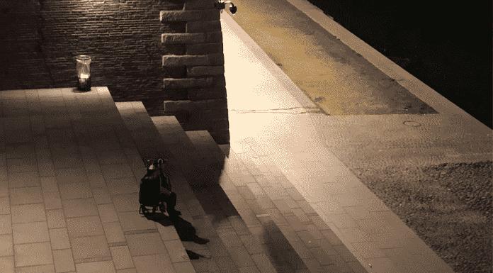 Place Saint-Pierre pendant le couvre-feu / Léo Molinié