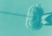 Les dons d'ovocytes et de spermatozoïdes sont encore insuffisants en Occitanie ©Elena Kontogianni