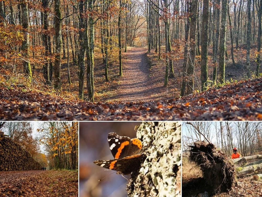 forêt Buzet sur Tarn