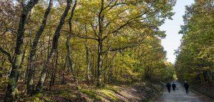 Plusieurs massifs forestiers de l'Aude sont fermés au public à partir de dimanche 15 août. Le risque de départ de feu est accru avec la sécheresse et le vent.