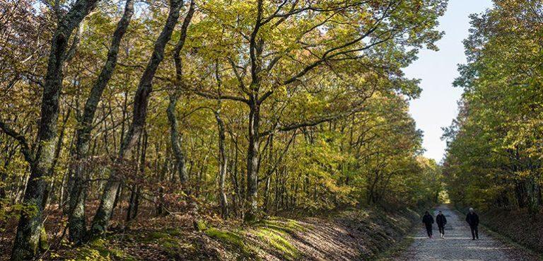2 nouveaux sites classés Espaces naturels sensibles près de Toulouse