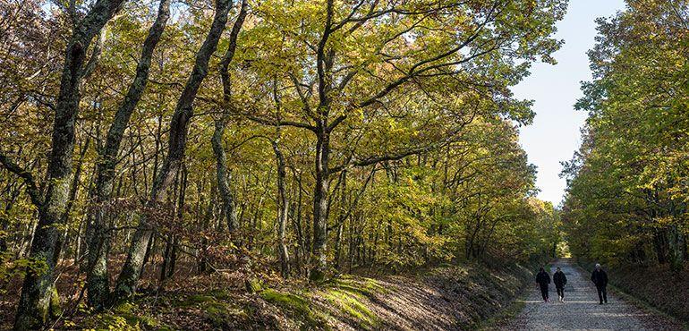 ballade escapade forêt nature