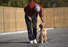 chien éducation post-traumatique