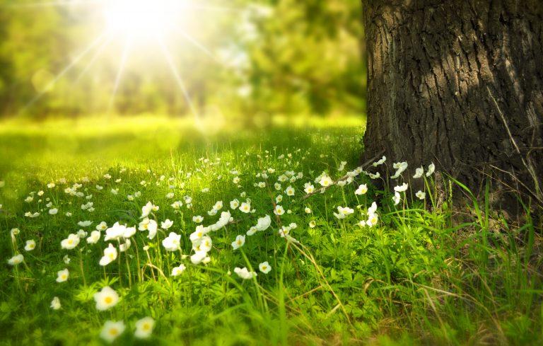 Deux nouveaux sites classés Espaces Naturels Sensibles en Haute-Garonne